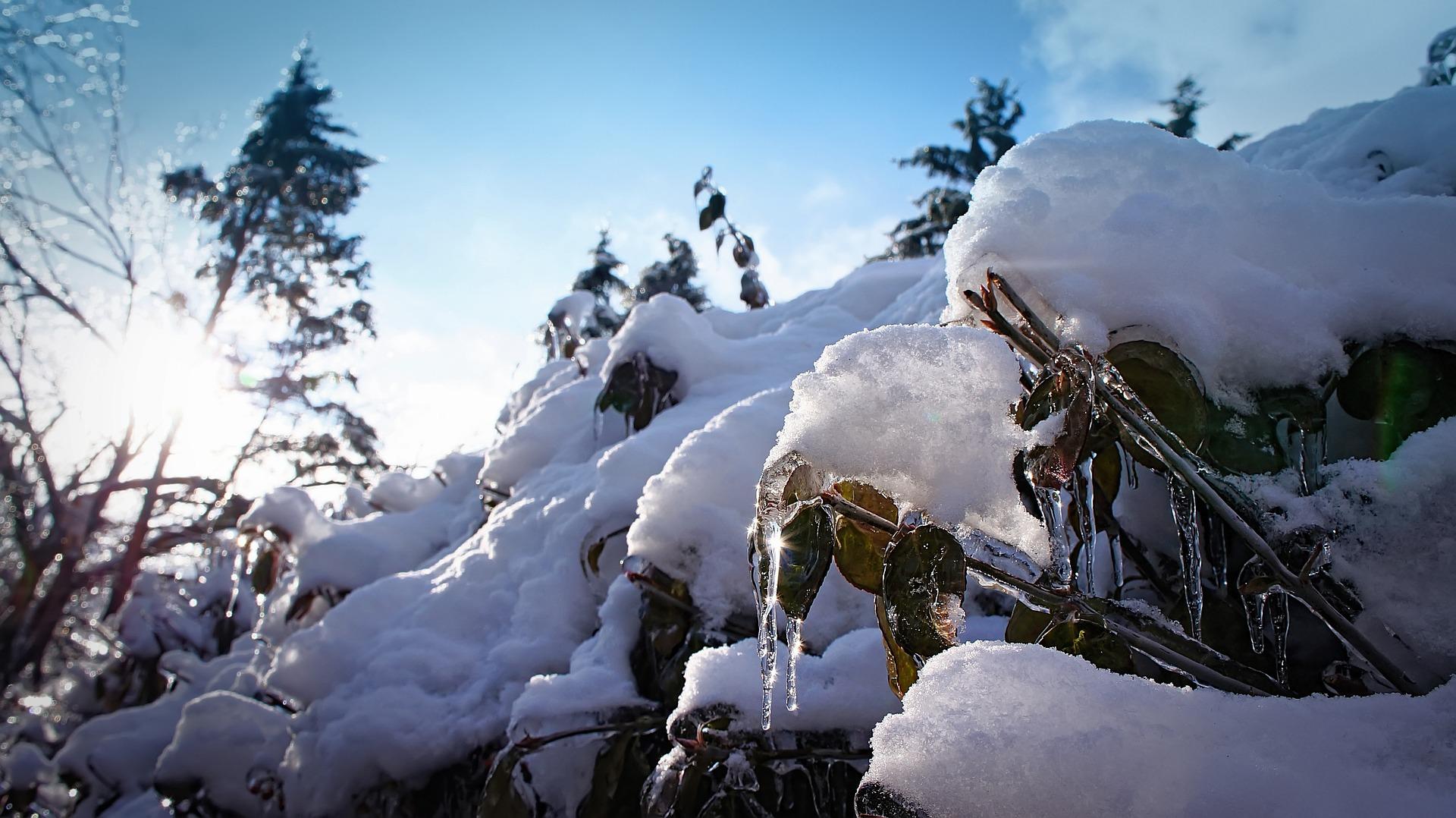 Štitnjača zimi