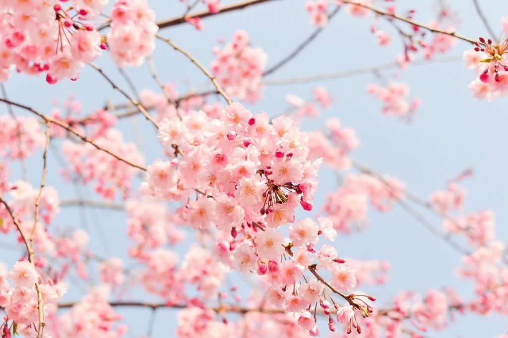 štitnjača u proljeće