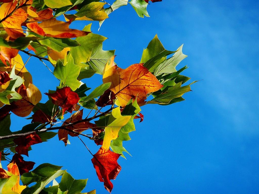 Štitnjača u jesen